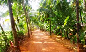 Kerala Tour Packages From Ahmedabad